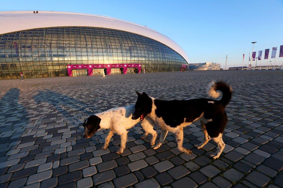 олимпиада сочи собаки убивают собак disgustingmen