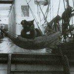 роберт скотт экспедиция история кот ниггер