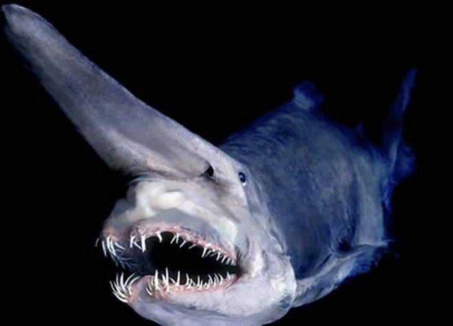 акула гоблин disgusting men