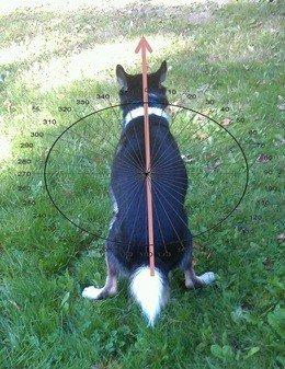 почему собаки мечутся прежде чем справить нужду