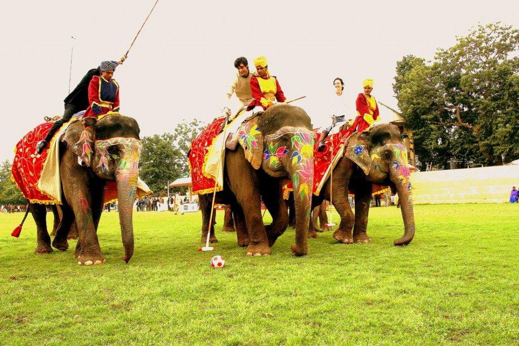 поло на слонах шок видео