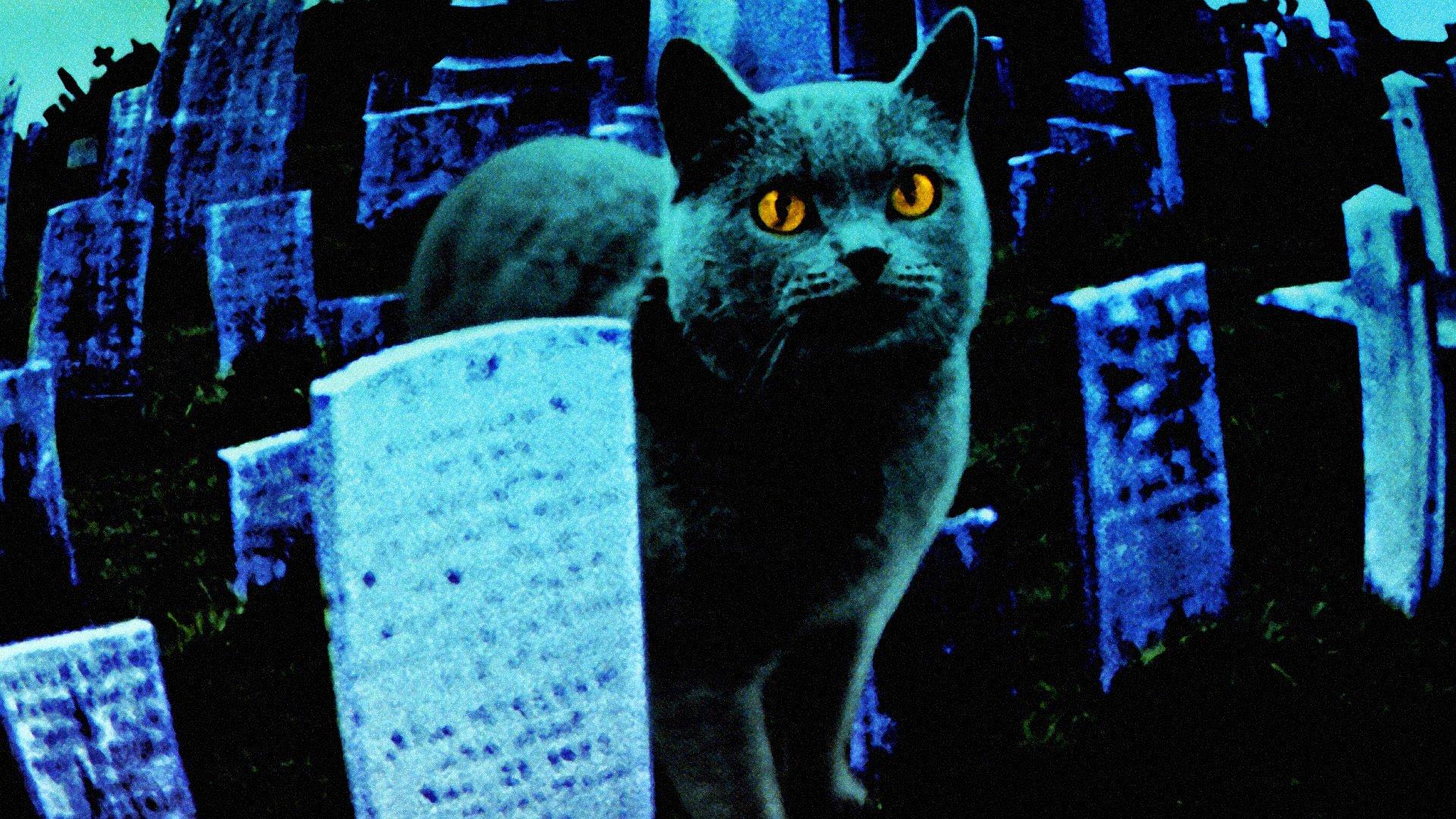 кладбище домашних животных стивен кинг перевод stephen king