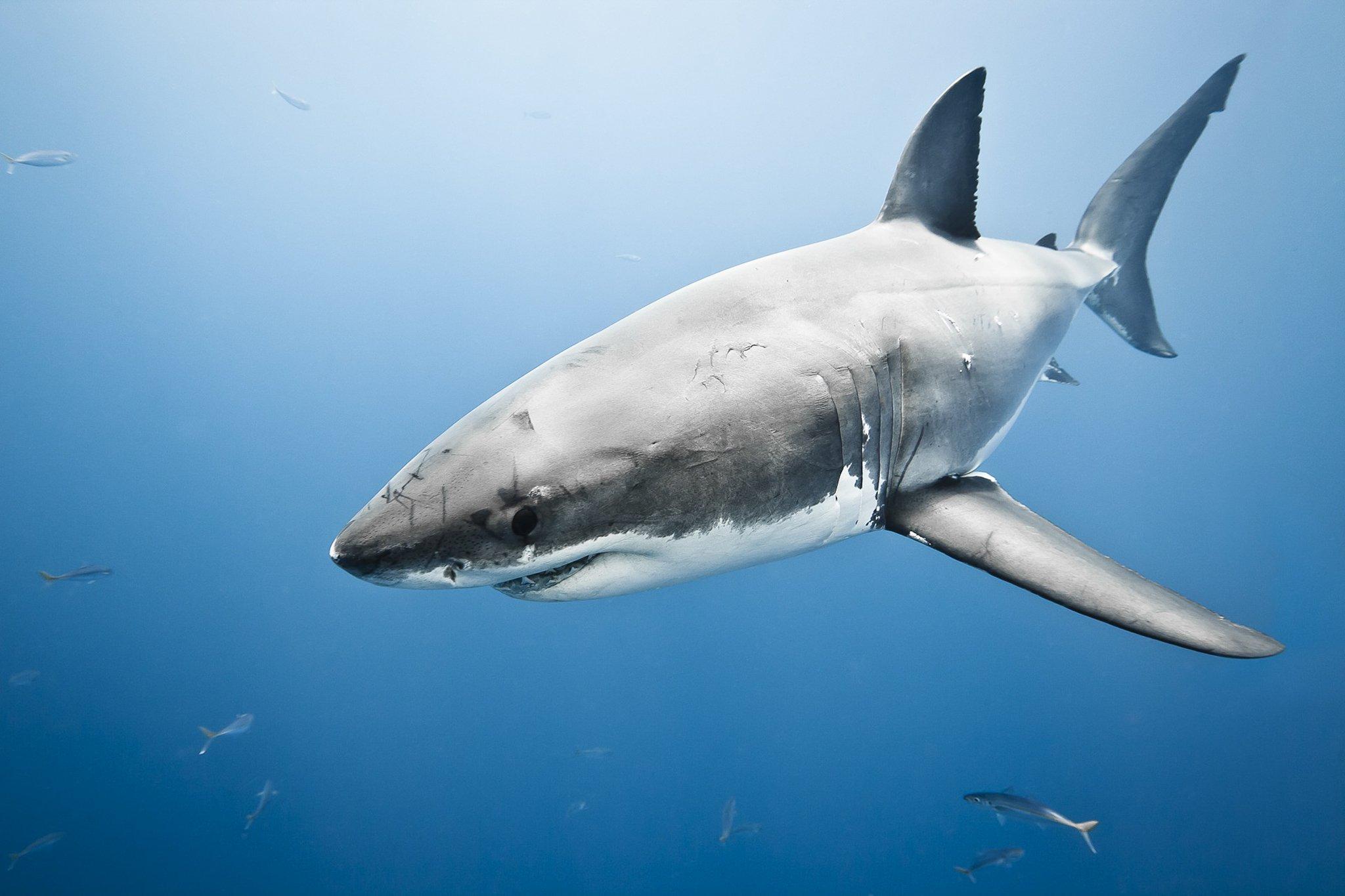 большая беля акула отвратительные мужики мы в полной жопе