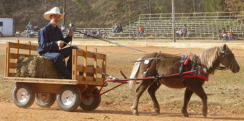 dixie-draft-horse-mule-carriage-auction-miniature-pony-pulls-heavy-cart