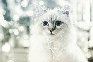 karl-lagerfeld-cat-3-million-last-year-01-2