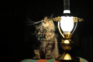 охуительные-истории-кошка-живность-лампа-1051445