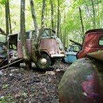 Дерево протыкает насквозь Volkswagen Camper
