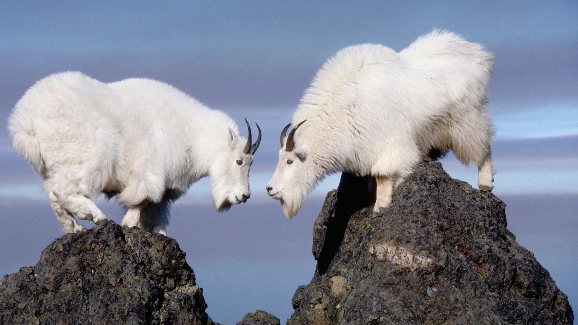 два козла отвратительные мужики