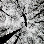 wildlife photographer of the year 2015 фото победители winner pics photos отвратительные мужики