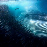 wildlife photographer of the year 2015 фото победители winner pics photos отвратительные мужики