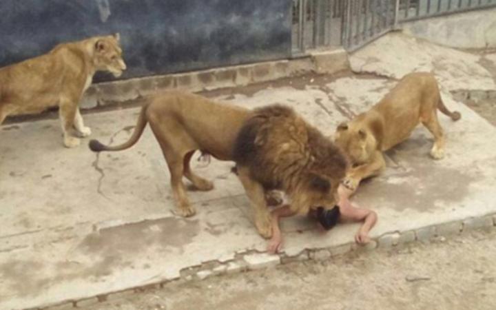 Понедельник начинается с дичи самоубийца львы застрелили бульдозер китай гитлер кефир кебаб сразиться борьба новости дичь отвратительные мужики