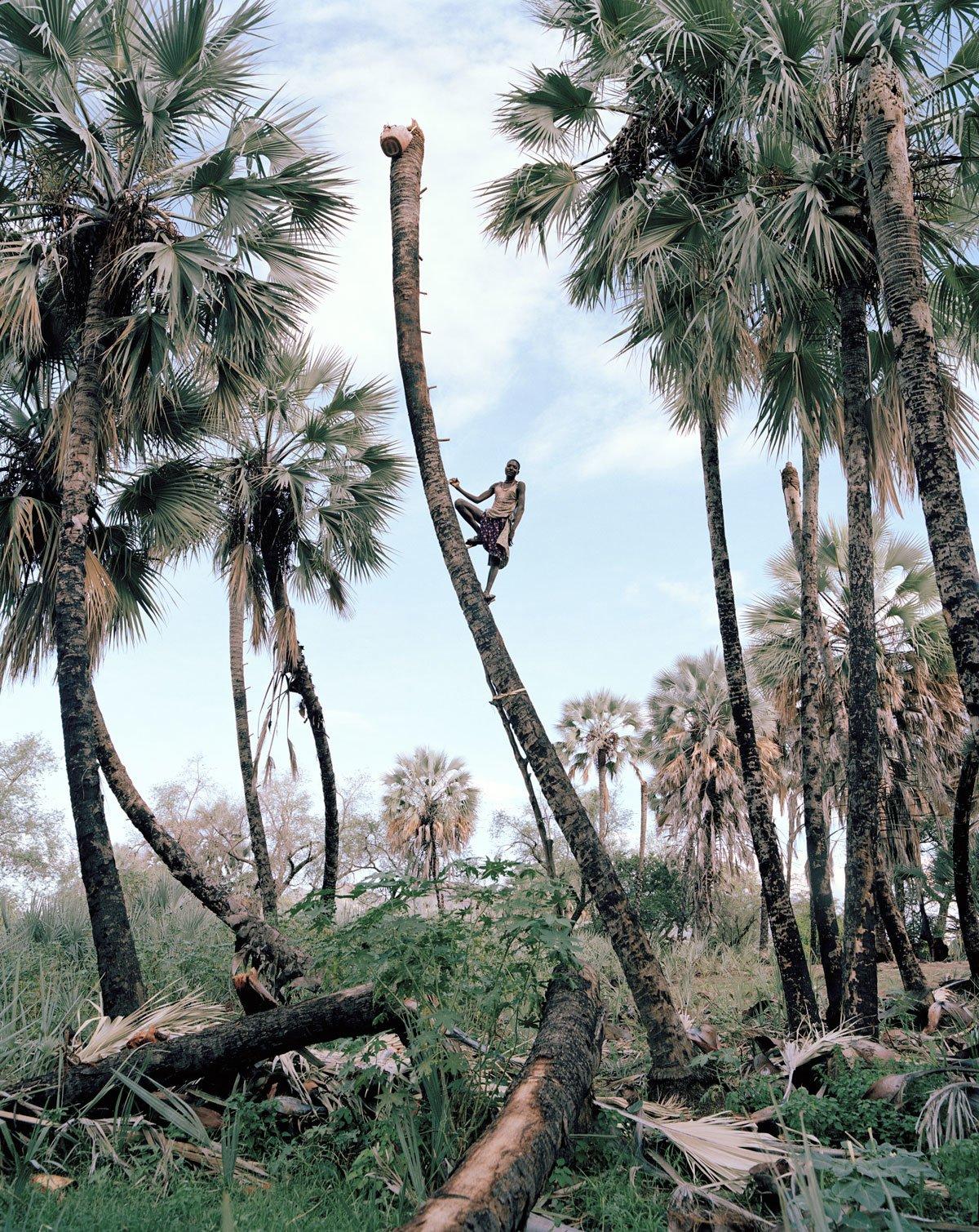 Рабочий, собирающий пальмовое масло. Кунене, Намибия.