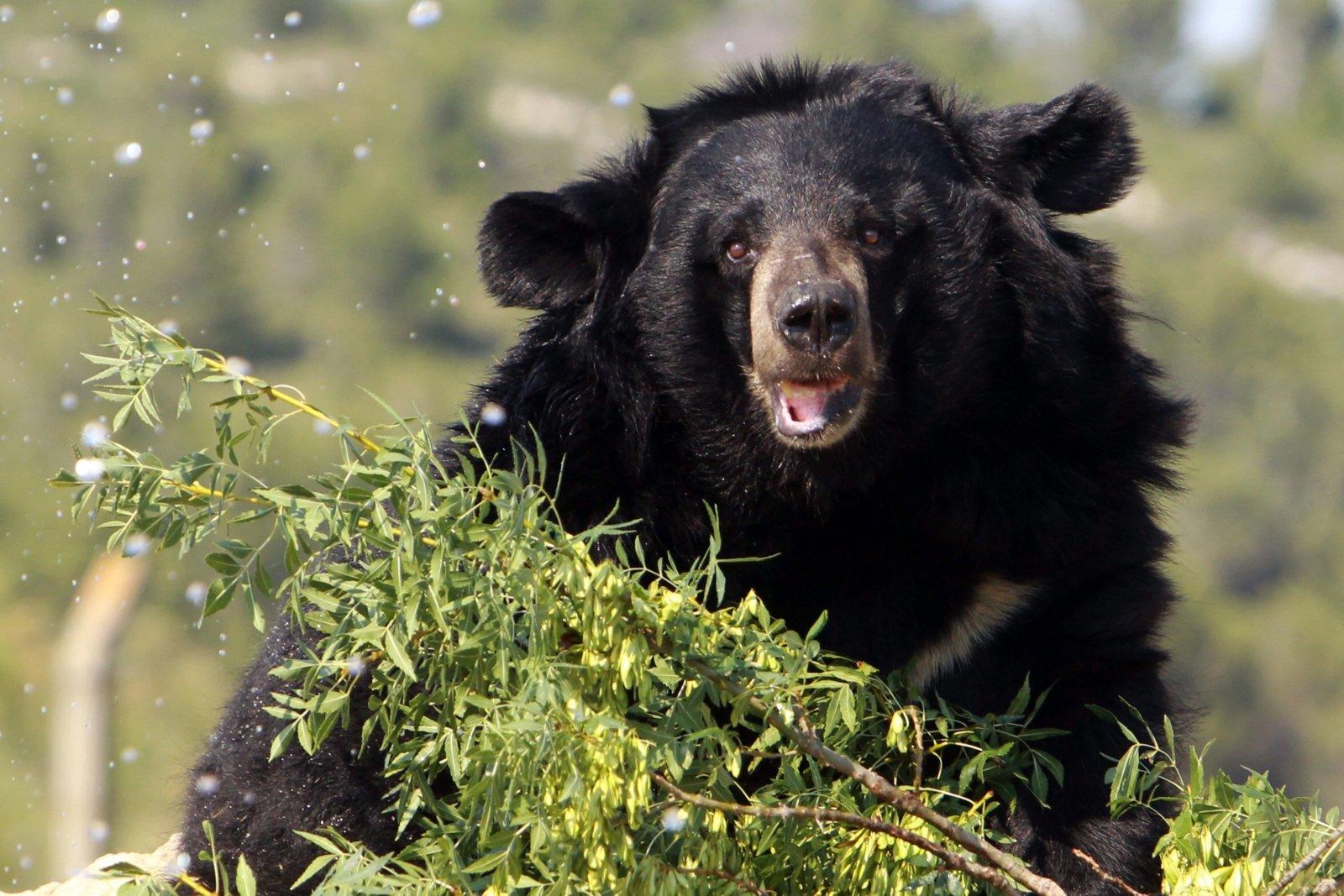нудисты драка каратист побил медведя понедельник начинается с дичи отвратительные мужики disgusting men