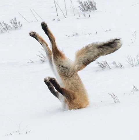 https-%2F%2Fblueprint-api-production.s3.amazonaws.com%2Fuploads%2Fcard%2Fimage%2F251929%2FAngela_Bohlke_fox