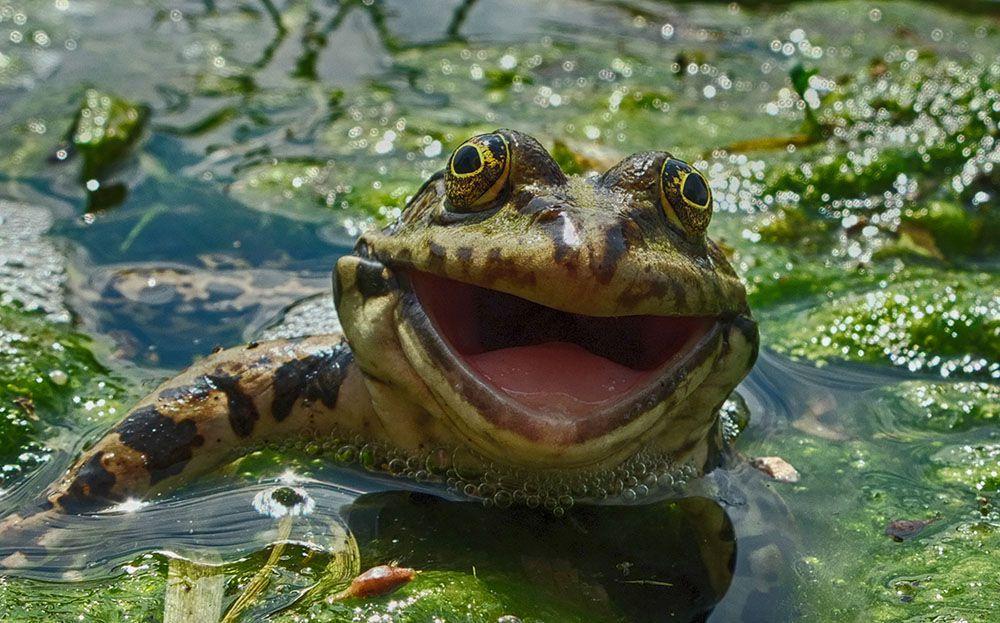 Comedy Wildlife Photography Awards фото смешные глупые невероятные странные снимки животных фото новости отвратительные мужики