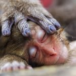 wildlife photographer of the year 2016 winners победители фото снимки путешествия животные лучшие фотографии отвратительные мужики