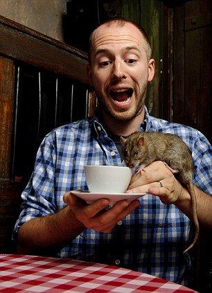 кафе с крысами крысиное кафе rat cafe san francisco отвратительные мужики disgusting men