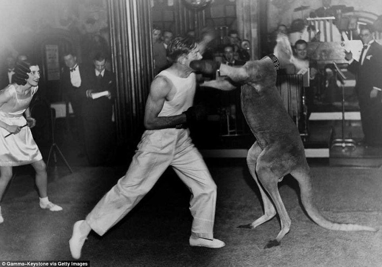 животные на ринге отвратительные мужики disgusting men