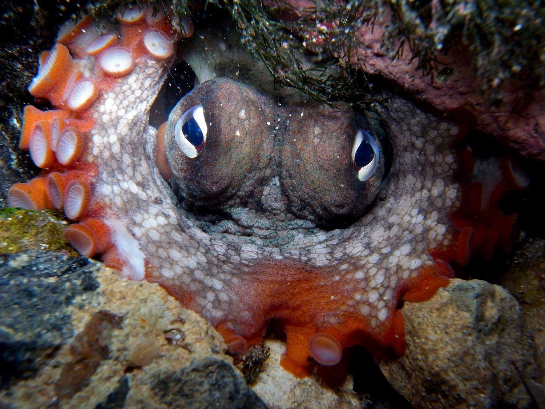осьминоги город осьминогов наука отвратительные мужики disgusting men