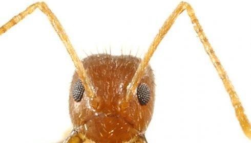 ленивые муравьи наука отвратительные мужики disgusting men