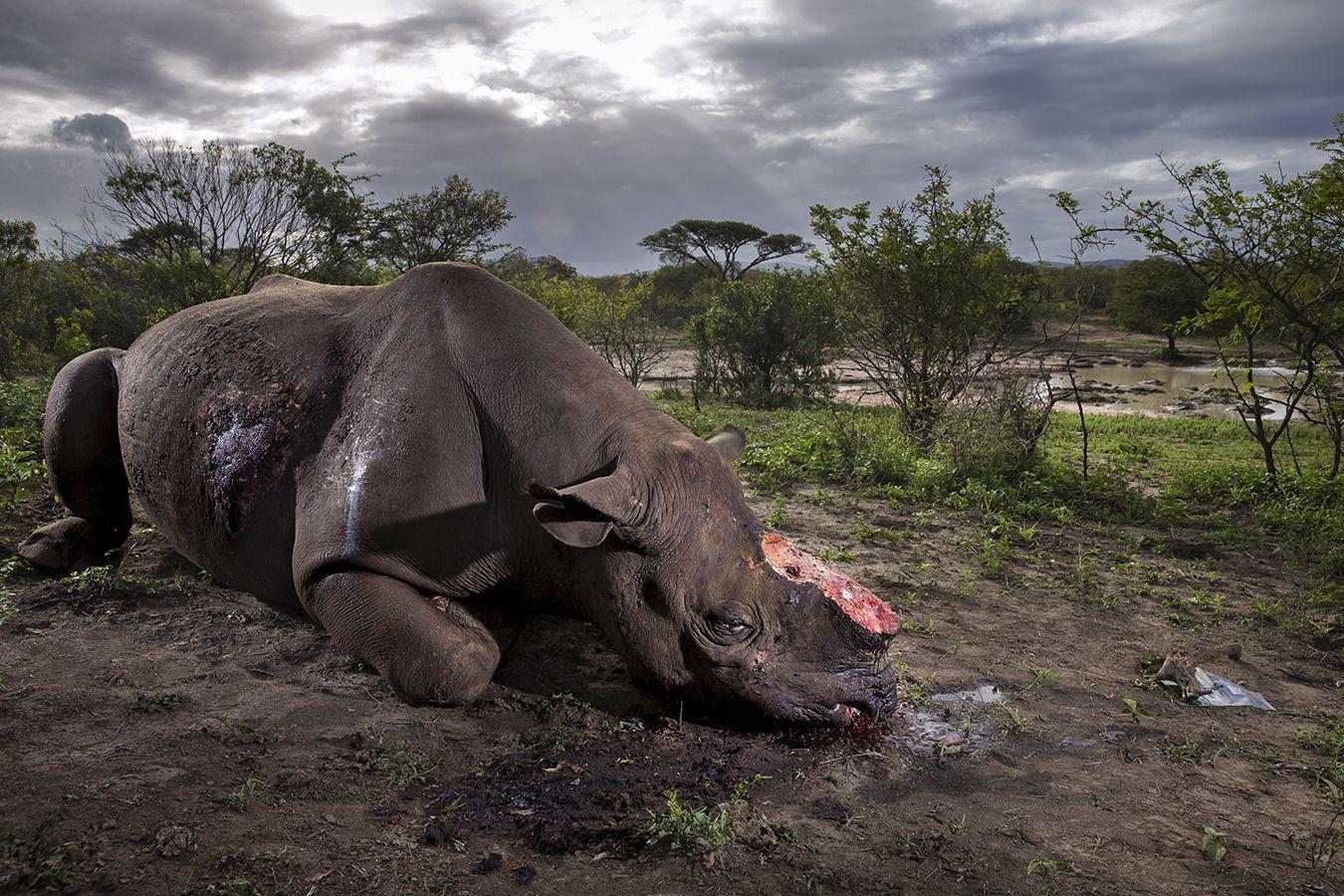 Wildlife Photography Awards фотоконкурс животные отвратительные мужики disgusting men