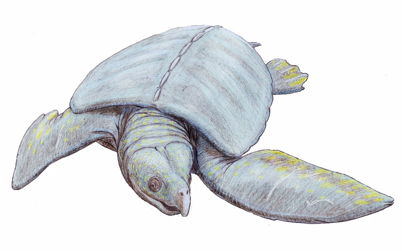 кожистые черепахи кожистая черепаха отвратительные мужики disgusting men
