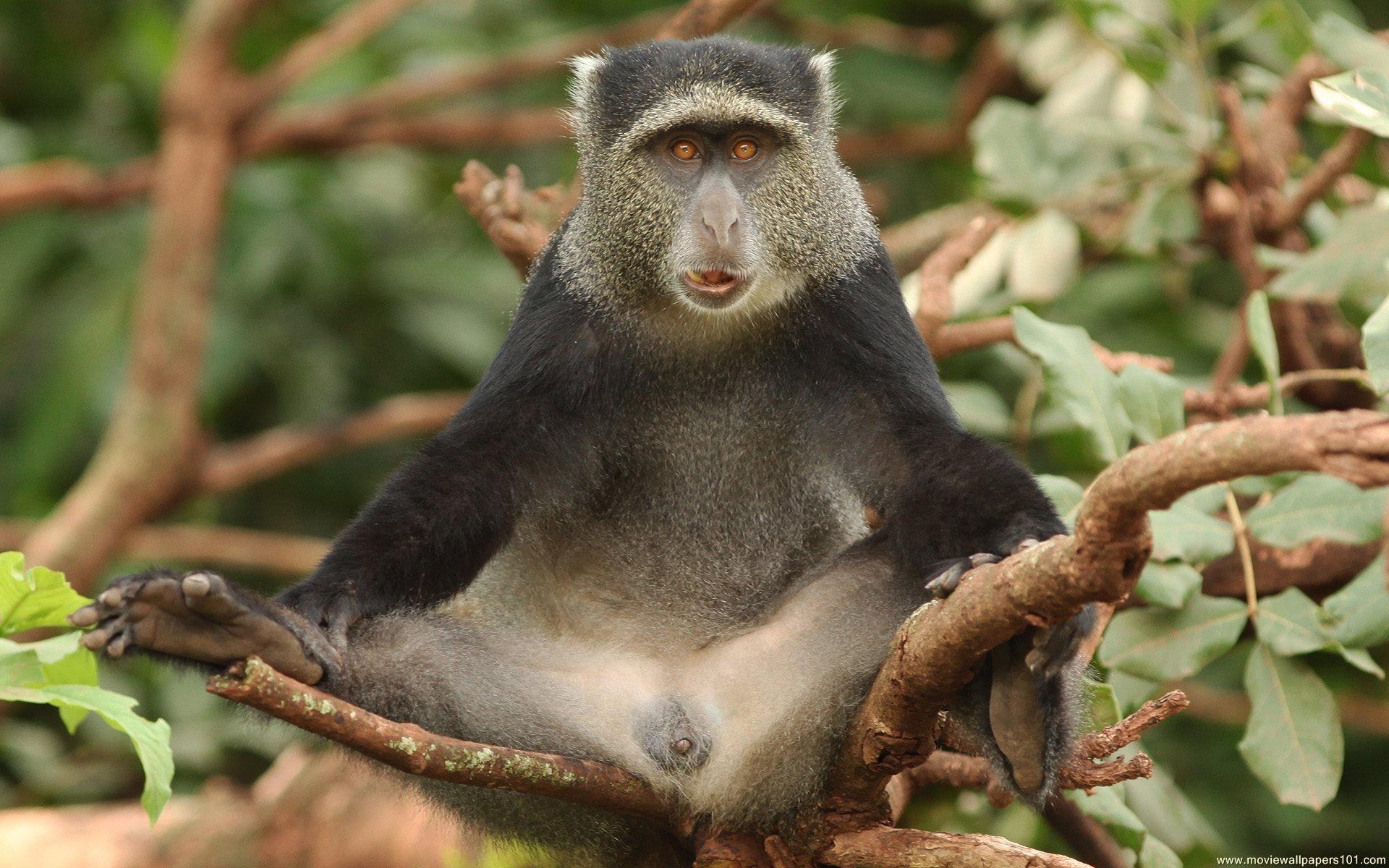 королевство обезьян 2015 случайные обзоры отвратительные мужики disgusting men