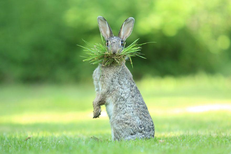 comedy wildlife photography awards самые смешные фотографии животных 2017 отвратительные мужики disgusting men