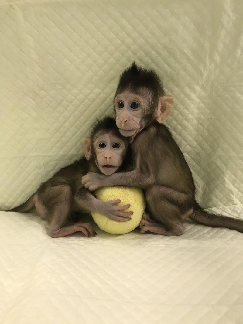 клонирование обезьян опасности клонирования отвратительные мужики disgusting men