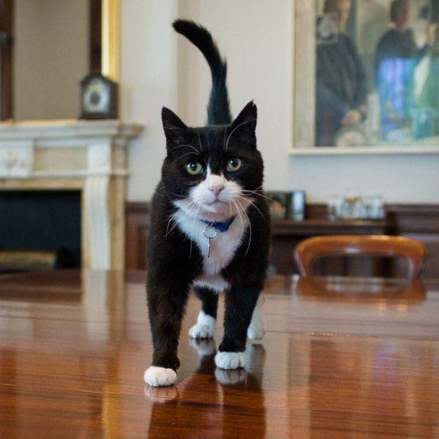 кот премьер-министра понедельник начинается с дичи отвратительные мужики