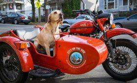 4 вещи, которые я понял после покупки мотоцикла «Урал»
