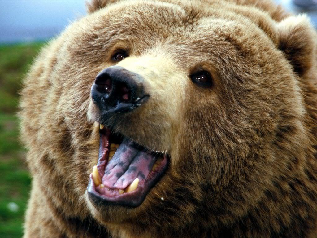 Понедельник начинается с дичи медведь пасха римские легионеры отвратительные мужики disgusting men