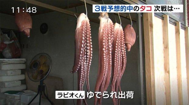 федор смолов в японии съели осьминога-предсказателя понедельник начинается с дичи