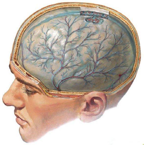 мозг травма наука история отвратительные мужики disgusting men