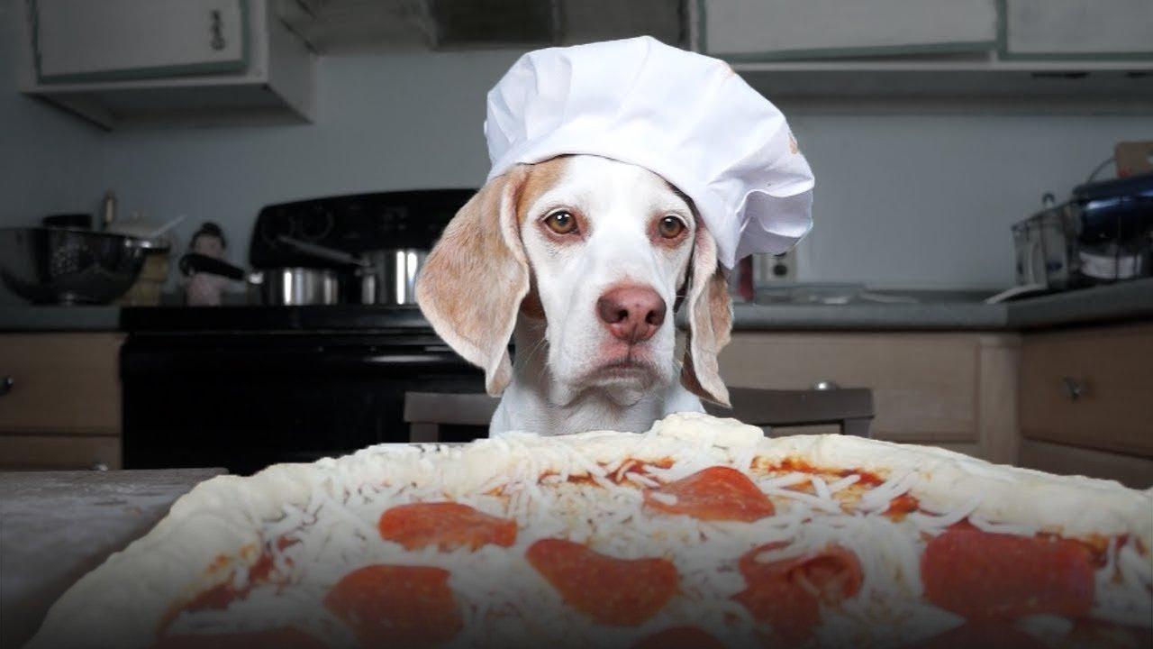 пиццамейкер пицца работа спокойна я сам отвратительные мужики disgusting men