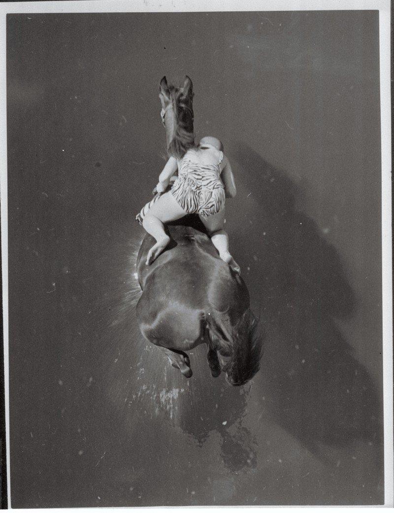 лошадиный дайвинг прыжки в воду на лошадях шоу буффало билла прыжки в воду