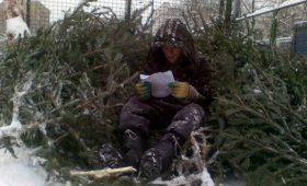 Как я торговал елками