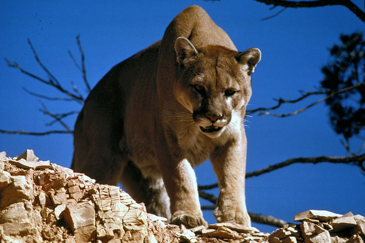 конан варвар горный лев мужик из колорадо отвратительные мужики disgusting men