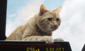 Тот еще Гусь. Что нужно знать о коте из «Капитана Марвела»