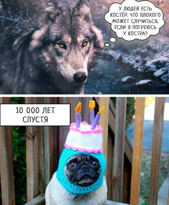 древние собаки одомашнивание волков отвратительные мужики disgusting men
