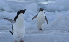 День полярника: как сегодня выглядит российская Антарктика