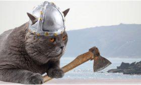 Какими были коты викингов?