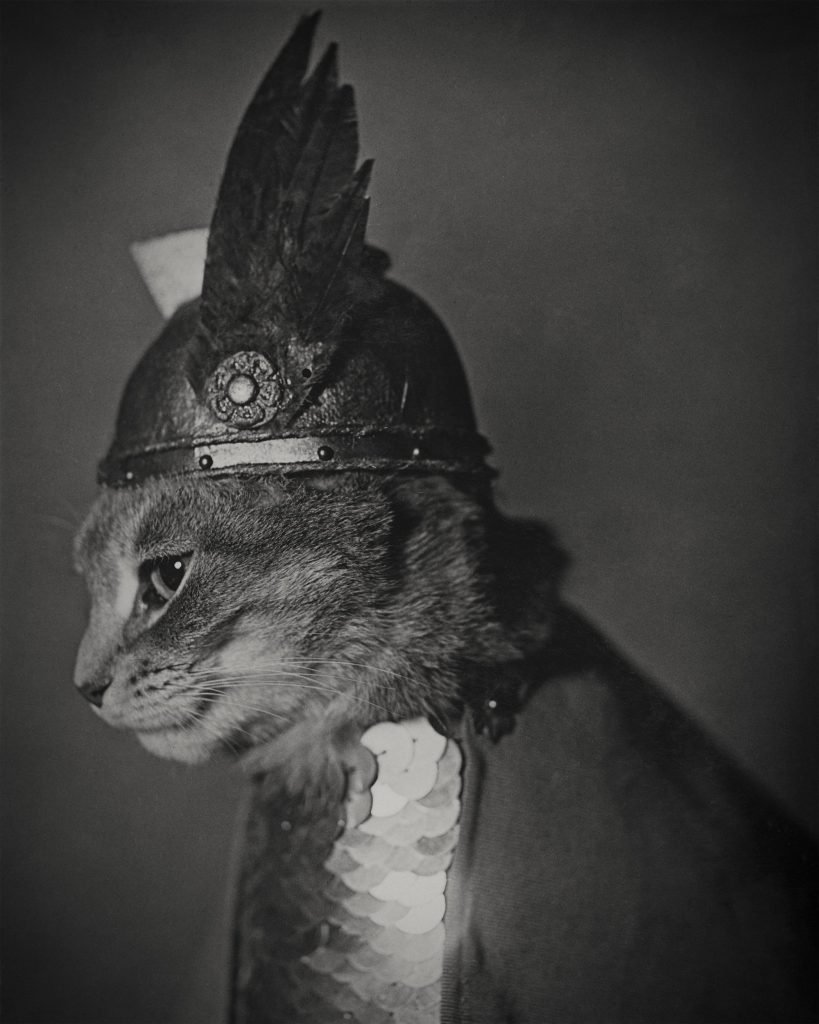 коты викингов викинг кот отвратительные мужики disgusting men