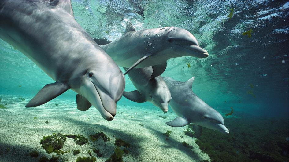 дельфины отвратительные мужики disgusting men