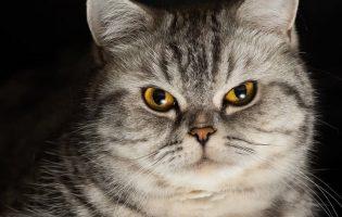 Уютные комочки зла — коты и блэк-метал