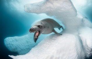 Ocean Art 2019: невероятные фото подводного мира