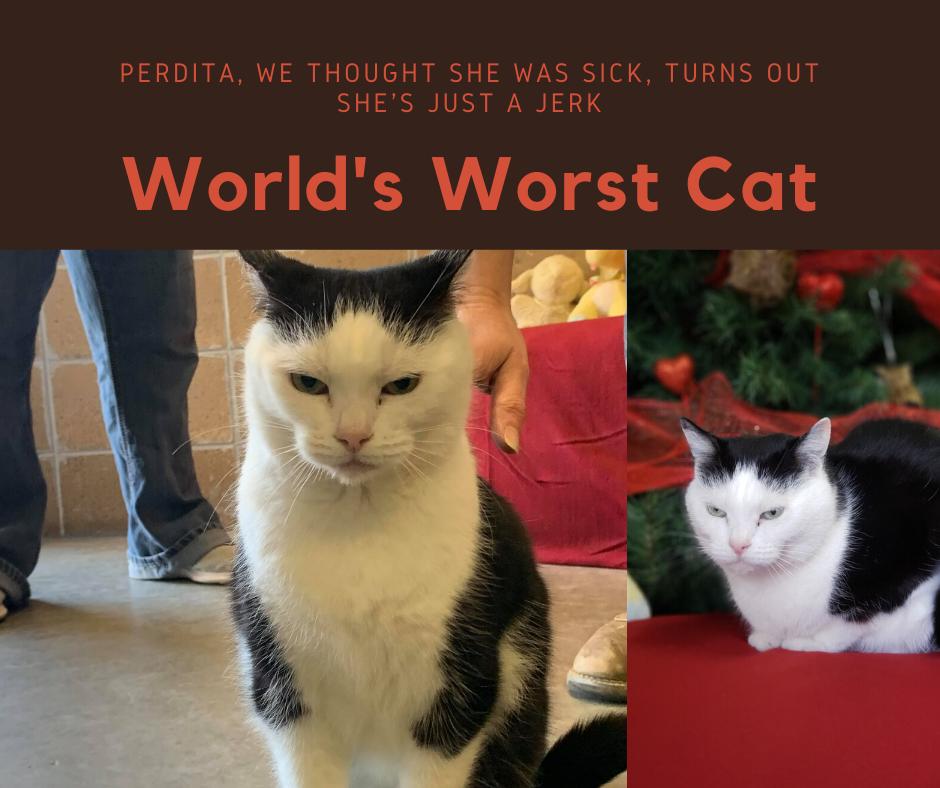 худший кот в мире худшая кошка в мире отвратительные мужики disgustong men