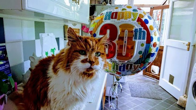 самый старый кот в мире отвратительные мужики disgusting men