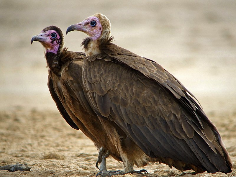 факты о птицах отвратительные мужики disgusting men