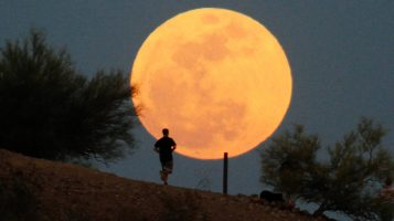 Канадцы массово воют на луну. Это помогает им пережить карантин